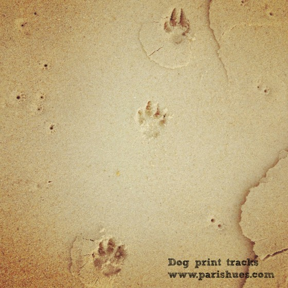 Dog print tracks beach France